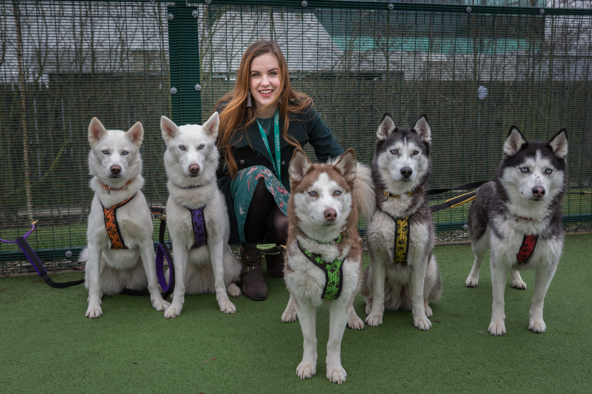 Team Waddell Huskies at event at Quorum Business Park in Newcastle as part of National Pet Day Picture taken by DAVID WOOD