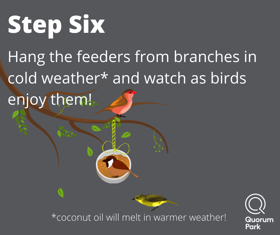 Hang on branches and watch birds feed!
