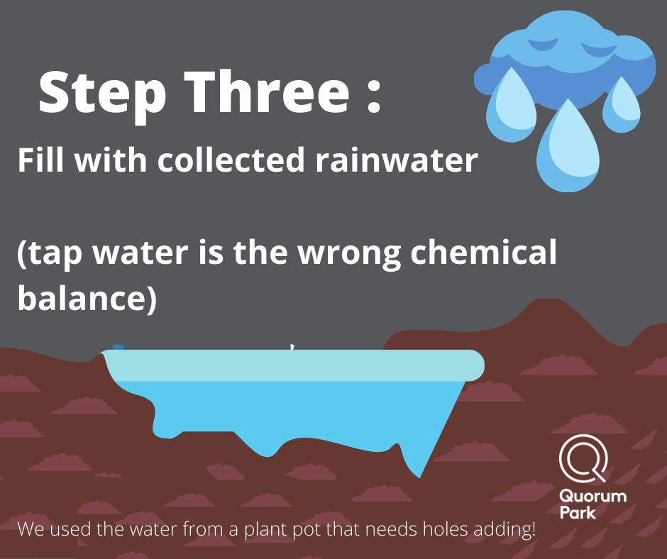 Wild Wednesday Step Three: Fill with rain water